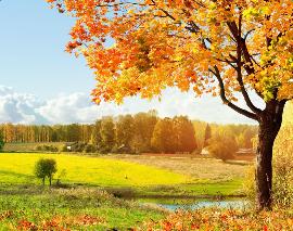 形客秋天的成语有哪些