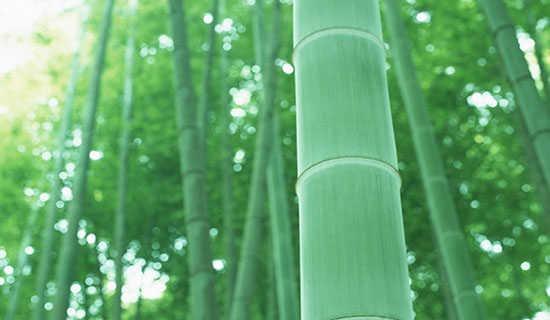 竹木器店喜庆的春联